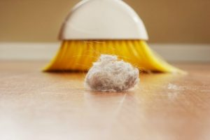 About Those Dust Bunnies Lurking in Your Home…They Might Be Making You Fat