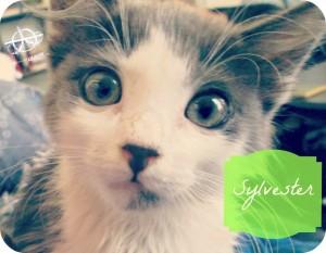 Happiness is a Warm, Fuzzy Kitten