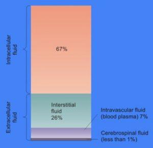 Interstitial fluid vs. Intracellular fluid
